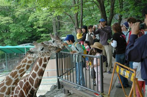 Higashiyama Zoo giraffe City of Nagoya