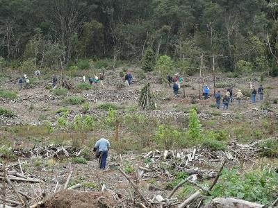 Planning forest restoration to improve water quality in a former plantation in Colombia