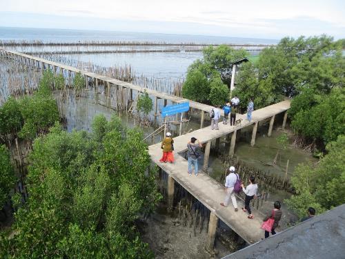 Mangrove restoration in Thailand