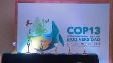 CHM Award at COP 13