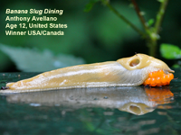 Banana Slug Dining by Anthony Avellano