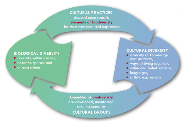 importance of understanding cultural diversity