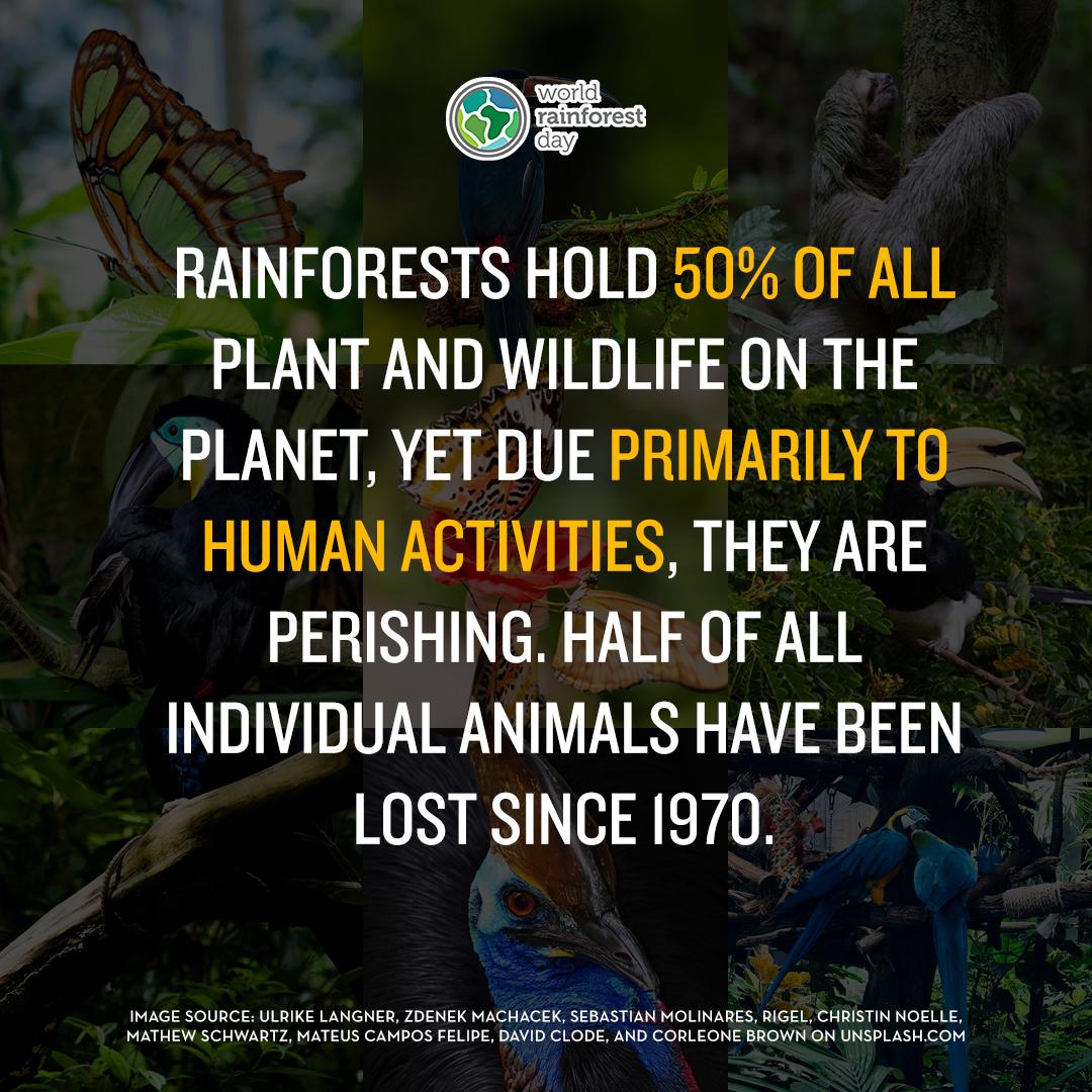 World Rainforest Day 3