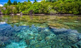 Coast Coral Reefs Transparency