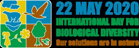 Логотип IDB2020