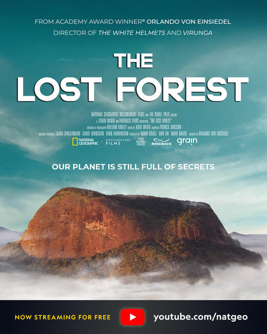 IDB 2020 Lost Forest Poster